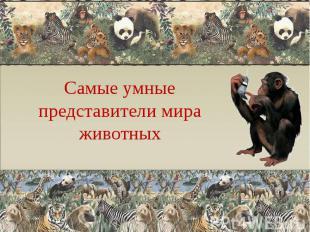 Самые умные представители мира животных