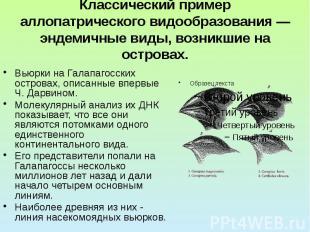 Классический пример аллопатрического видообразования — эндемичные виды, возникши