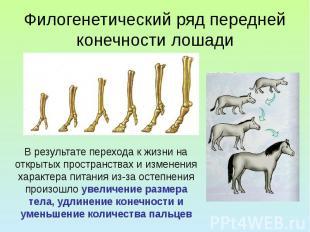 Филогенетический ряд передней конечности лошади