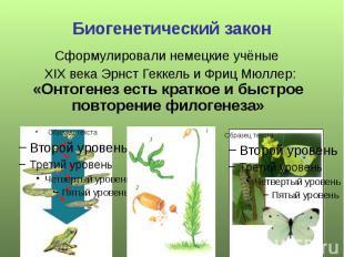 Биогенетический закон Сформулировали немецкие учёные XIX века Эрнст Геккель и Фр