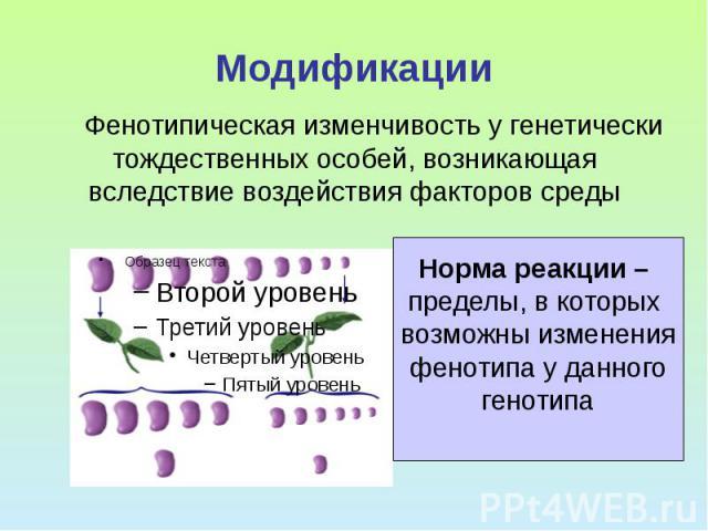 Модификации Фенотипическая изменчивость у генетически тождественных особей, возникающая вследствие воздействия факторов среды