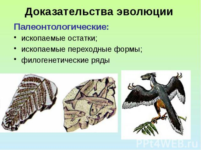 Доказательства эволюции Палеонтологические: ископаемые остатки; ископаемые переходные формы; филогенетические ряды