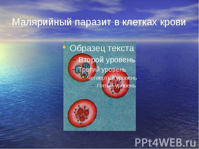 Малярийный паразит в клетках крови