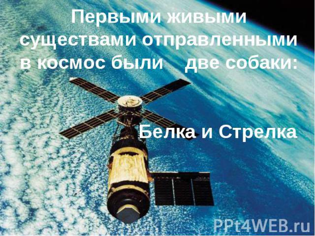 Первыми живыми существами отправленными в космос были две собаки: Белка и Стрелка