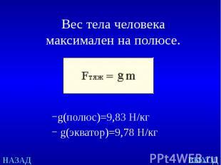 Вес тела человека максимален на полюсе. g(полюс)=9,83Н/кг g(эк
