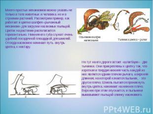 Много простых механизмов можно указать не только в теле животных и человека, но