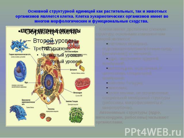 Основной структурной единицей как растительных, так и животных организмов является клетка. Клетка эукариотических организмов имеет во многом морфологические и функциональные сходства. Клетки имеют достаточно сложную структуру, основными компонентами…
