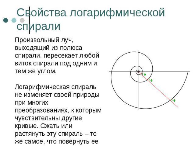 Произвольный луч, выходящий из полюса спирали, пересекает любой виток спирали под одним и тем же углом. Произвольный луч, выходящий из полюса спирали, пересекает любой виток спирали под одним и тем же углом. Логарифмическая спираль не изменяет своей…