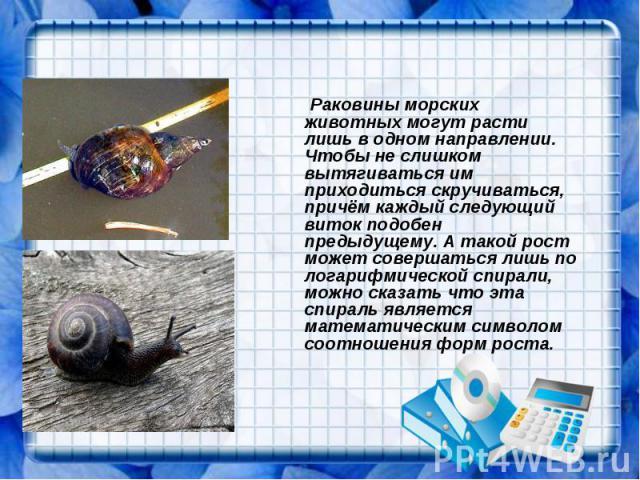 Раковины морских животных могут расти лишь в одном направлении. Чтобы не слишком вытягиваться им приходиться скручиваться, причём каждый следующий виток подобен предыдущему. А такой рост может совершаться лишь по логарифмической спирали, можно сказа…
