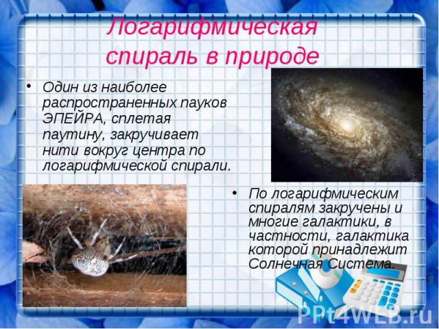 Логарифмическая спираль в природе Один из наиболее распространенных пауков ЭПЕЙРА, сплетая паутину, закручивает нити вокруг центра по логарифмической спирали.