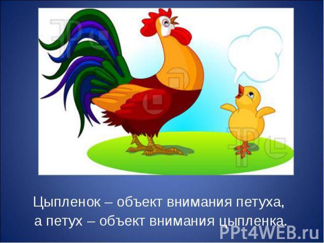 Цыпленок – объект внимания петуха, Цыпленок – объект внимания петуха, а петух – объект внимания цыпленка.