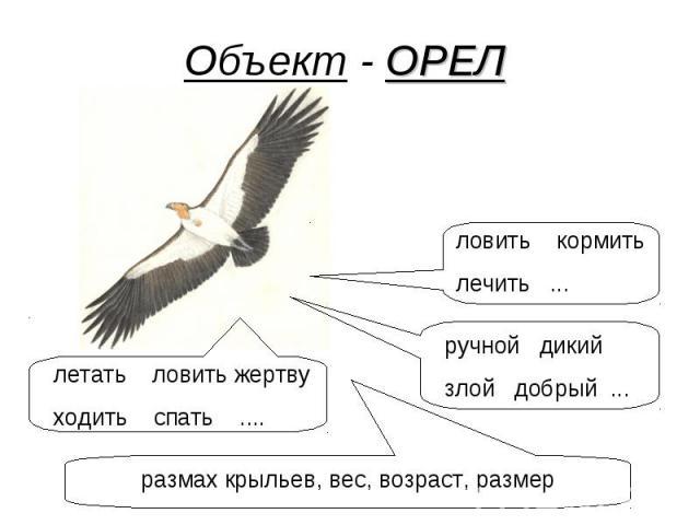 Объект - ОРЕЛ