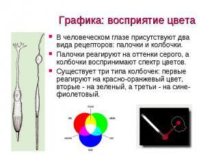 Графика: восприятие цвета В человеческом глазе присутствуют два вида рецепторов: