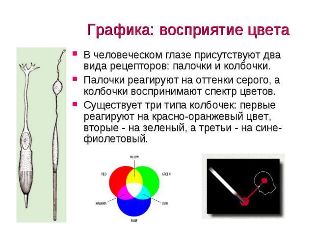 Графика: восприятие цвета В человеческом глазе присутствуют два вида рецепторов: палочки и колбочки. Палочки реагируют на оттенки серого, а колбочки воспринимают спектр цветов. Существует три типа колбочек: первые реагируют на красно-оранжевый цвет,…