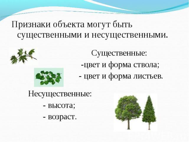 Признаки объекта могут быть существенными и несущественными. Признаки объекта могут быть существенными и несущественными. Существенные: -цвет и форма ствола; - цвет и форма листьев. Несущественные: - высота; - возраст.