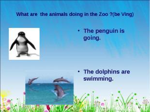 The penguin is going. The penguin is going. The dolphins are swimming.