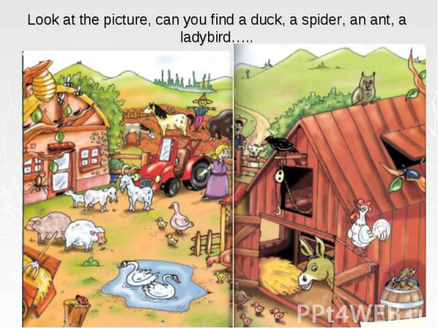 Look at the picture, can you find a duck, a spider, an ant, a ladybird…..