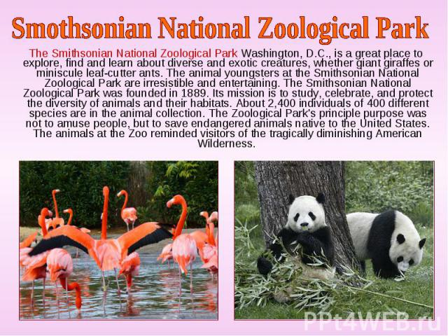 The Smithsonian National Zoological Park Washington, D.C., is a great place to explore, find and learn about diverse and exotic creatures, whether giant giraffes or miniscule leaf-cutter ants. The animal youngsters at the Smithsonian National Zoolog…