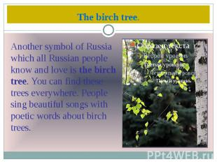 The birch tree.