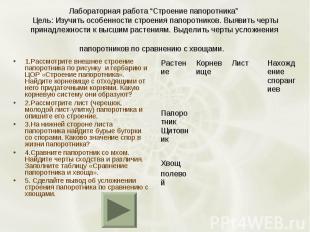 1.Рассмотрите внешнее строение папоротника по рисунку и гербарию и ЦОР «Строение
