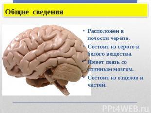 Расположен в полости черепа. Расположен в полости черепа. Состоит из серого и бе