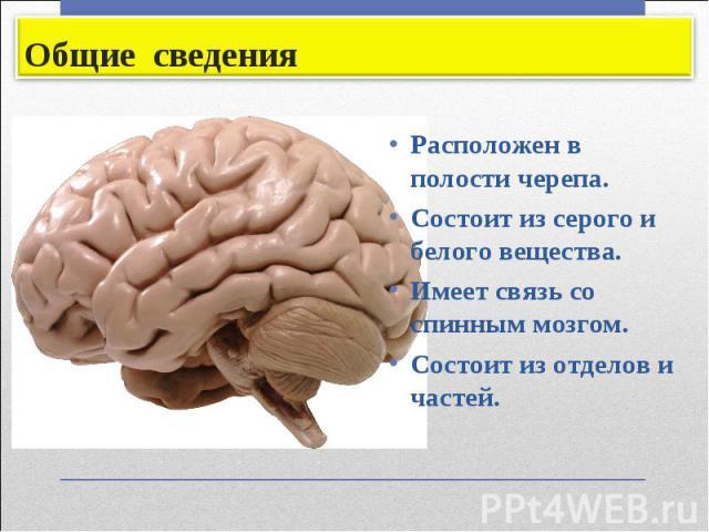 Расположен в полости черепа. Расположен в полости черепа. Состоит из серого и белого вещества. Имеет связь со спинным мозгом. Состоит из отделов и частей.