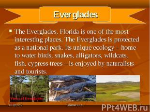 The Everglades, Florida is one of the most interesting places. The Everglades is