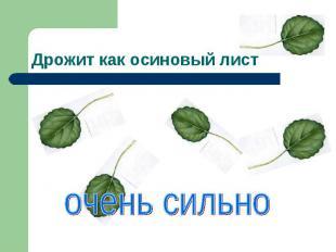 Дрожит как осиновый лист