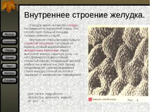 Желудок имеет множество складок на поверхности внутренней стенки. Это способству
