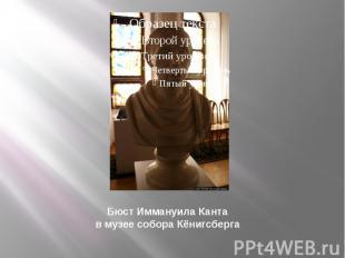 Бюст Иммануила Канта в музее собора Кёнигсберга