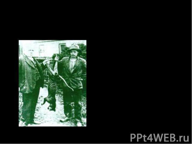 Вымирание сумчатого волка! Когда все считали что сумчатые волки вымерли Кэвин Камерон доказал что они существуют в1985 году