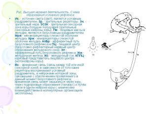 Рис. Высшая нервная деятельность. Схема образования условного рефлекса: Рис. Выс