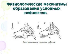 Физиологические механизмы образования условных рефлексов.