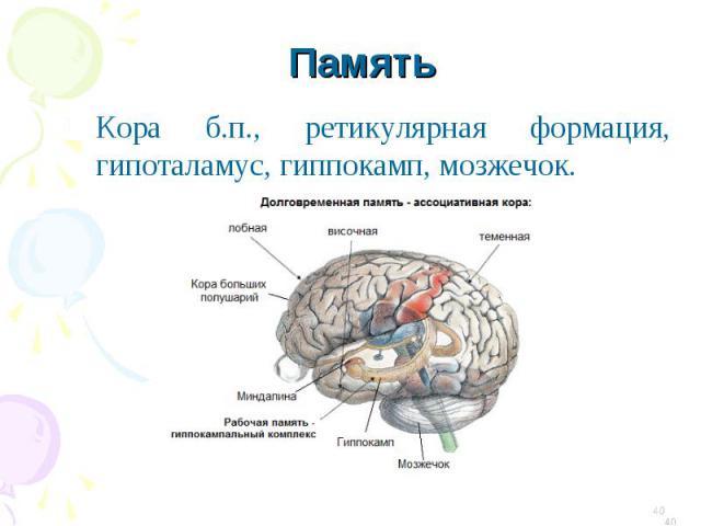 Кора б.п., ретикулярная формация, гипоталамус, гиппокамп
