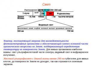 Фактор, поставляющий энергию для жизнедеятельности фотоавтотрофных организмов и