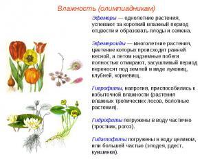Эфемеры — однолетние растения, успевают за короткий влажный период отцвести и об