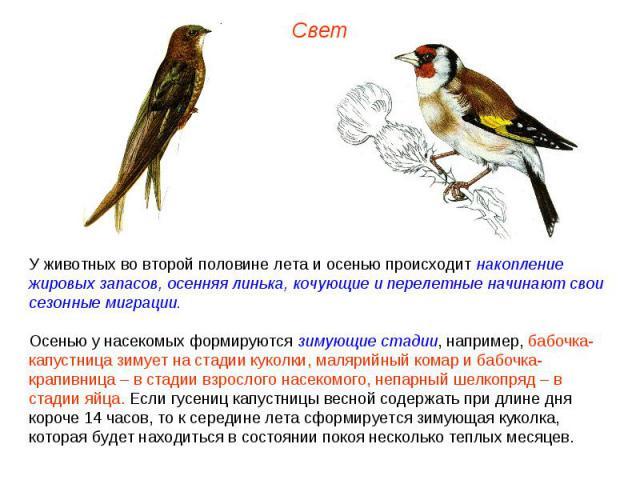 животных во второй половине лета и осенью происходит накопление жировых запасов, осенняя линька, кочующие и перелетные начинают свои сезонные миграции. Осенью у насекомых формируются зимующие стадии, например, бабочка-капустница зимует на стадии кук…