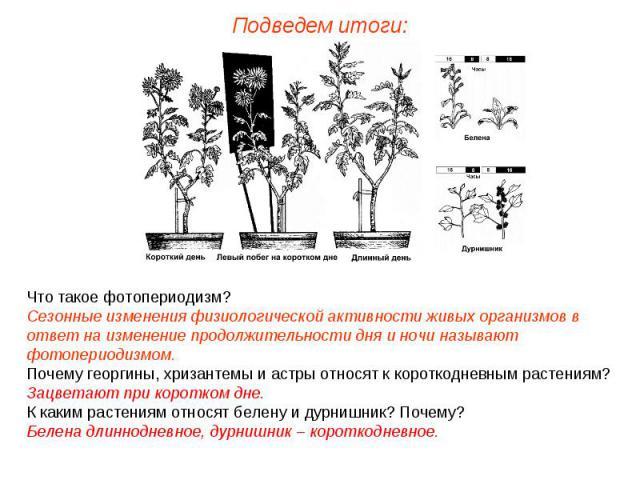 Что такое фотопериодизм? Сезонные изменения физиологической активности живых организмов в ответ на изменение продолжительности дня и ночи называют фотопериодизмом. Почему георгины, хризантемы и астры относят к короткодневным растениям? Зацветают при…
