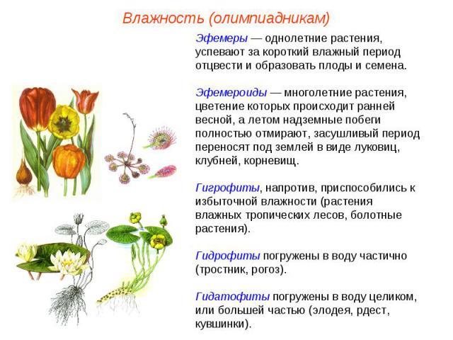 Эфемеры — однолетние растения, успевают за короткий влажный период отцвести и образовать плоды и семена. Эфемероиды — многолетние растения, цветение которых происходит ранней весной, а летом надземные побеги полностью отмирают, засушливый период пер…