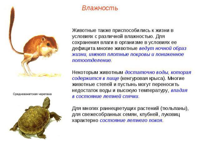 Животные также приспособились к жизни в условиях с различной влажностью. Для сохранения влаги в организме в условиях ее дефицита многие животные ведут ночной образ жизни, имеют плотные покровы и пониженное потоотделение. Некоторым животным достаточн…