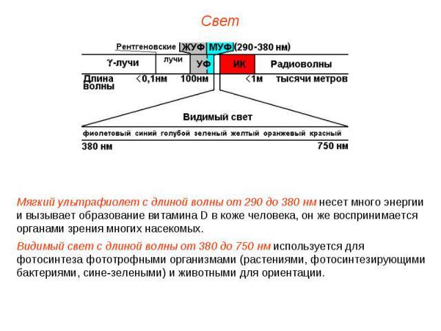 Мягкий ультрафиолет с длиной волны от 290 до 380 нм несет много энергии и вызывает образование витамина D в коже человека, он же воспринимается органами зрения многих насекомых. Видимый свет с длиной волны от 380 до 750 нм используется для фотосинте…