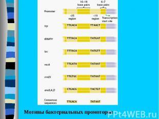 Бактериальный промотор