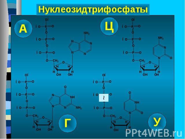 Рибонклеозидтрифосфаты – субстраты для синтеза РНК