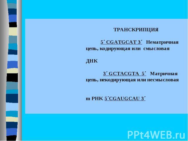 ТРАНСКРИПЦИЯ  5΄ CGATGCAT 3΄ Нематричная цепь, кодирующая или смысловая  ДНК  3΄ GCTACGTA 5΄ Матричная цепь, некодирующая или несмысловая   m PHK 5΄CGAUGCAU 3΄