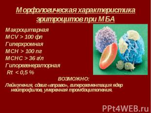 Морфологическая характеристика эритроцитов при МБА Макроцитарная MCV > 100 фл