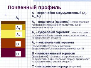 – перегнойно-аккумулятивный (А0, А1, А2) А0 – подстилка (дернина): свежеопавшие