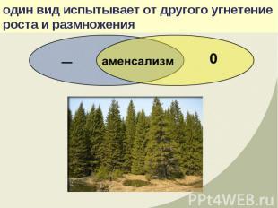оба вида независимы и не оказывают никакого действия друг на друга