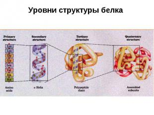 Уровни структуры белка