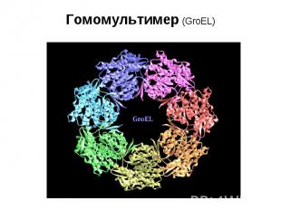 Гомомультимер (GroEL)