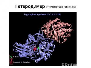 Гетеродимер (триптофан-синтаза)